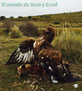 http://juanpuchefernandez.blogspot.com/2015/01/fauna-iberica.html