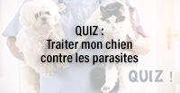 QUIZ : Traiter mon chien contre les parasites