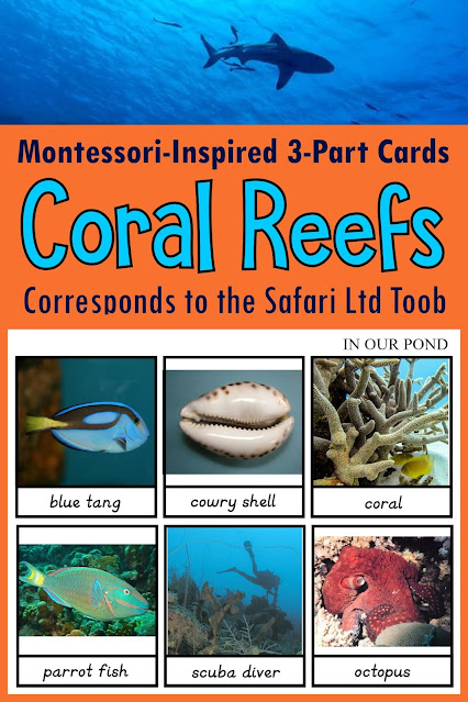 Learn and play about the Great Barrier Reef with the Safari Ltd Coral Reef toob!  Free Montessori-inspired 3-part cards to match the figurines.