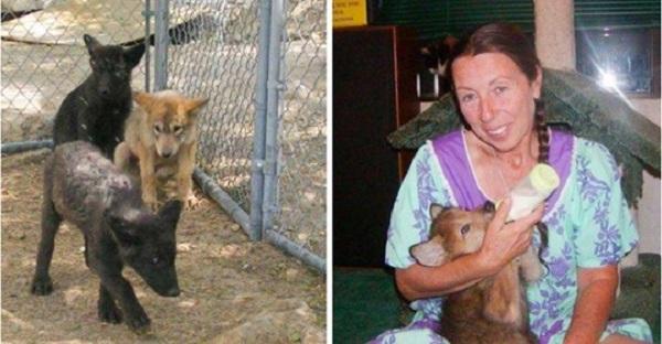 Девушка спасла трёх волчьих щенков от погибели, теперь у неё три самых лучших друга!