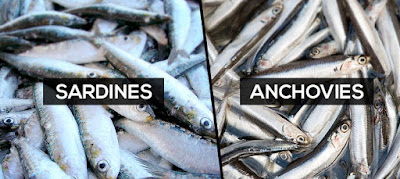 The Difference between Sardine Frozen and Anchovies - Sardine Fish Indonesia, Sardine Container, Sardine Frozen, Sardine Grading Machine,