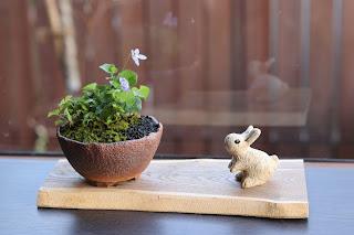 うさぎの人形と山野草盆栽