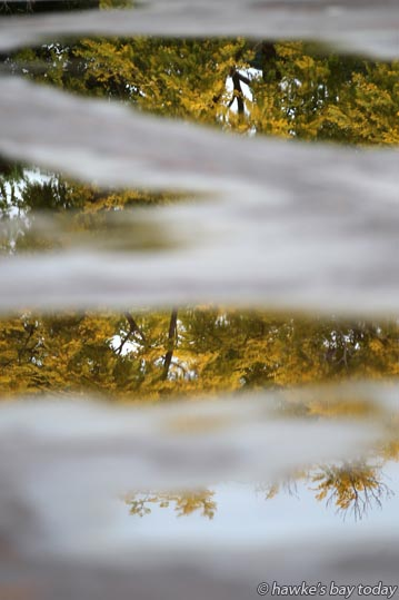 Trees reflected in puddles at the old skating rink at Whitmore Park, Napier, after light rain, drizzle, wet weather. photograph