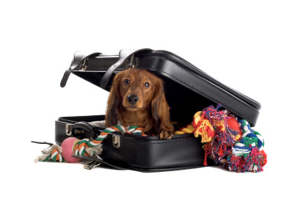LLevar a una mascota de viaje