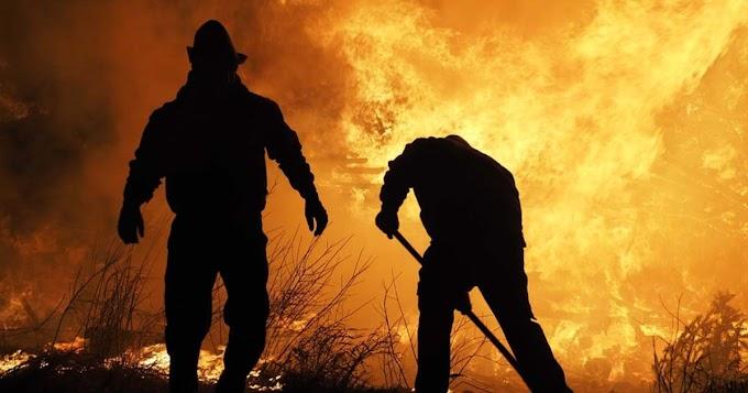 Magas aljnövényzet lángol Csökölynél, veszélyben a közeli erdő