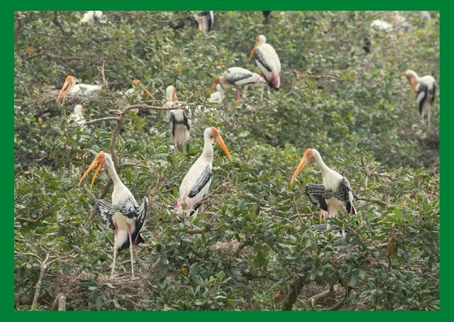 வேடந்தாங்கல் சரணாலயத்திற்கு பறவைகள் வரத்து குறைந்தது: இயற்கை விவசாயத்திற்குமாறும் விவசாயிகள்
