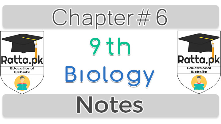 9th Biology Chapter 6 Enzymes Notes
