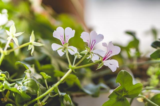 Los-10-mejores-consejos-para-fotografiar- la-primavera