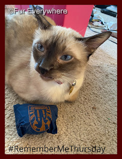 Tylan with his #RememberMeThursday catnip toy.