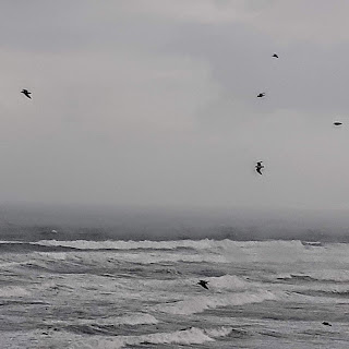 Gull silhouettes over churning ocean waves