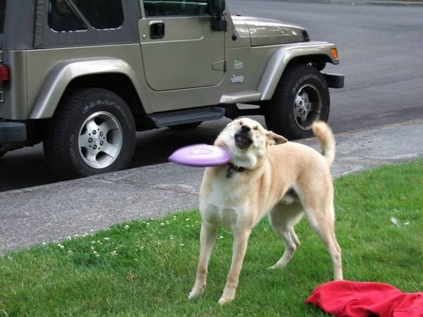 My dog ​​doesn't like to play frisbee