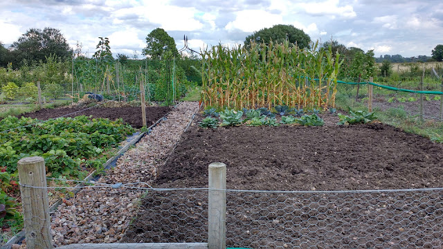 preparing the allotment for spring
