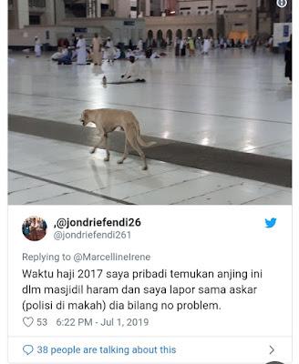Viral Foto Anjing Berkeliaran di Masjidil Haram, Polisi Askar: No Problem