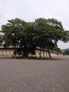 Un magnifico albero, con i rami sorretti dai pali