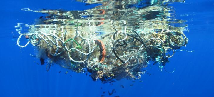 Plastikmüll in den Ozeanen: Dutzende verendete Wale in Deutschland angespült