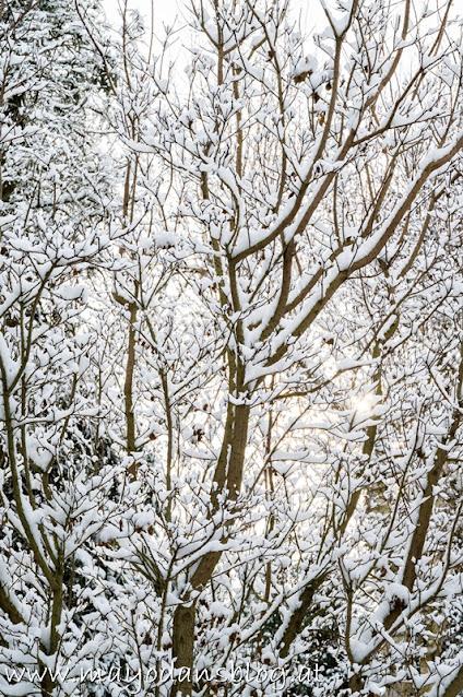 Strauch mit Schnee