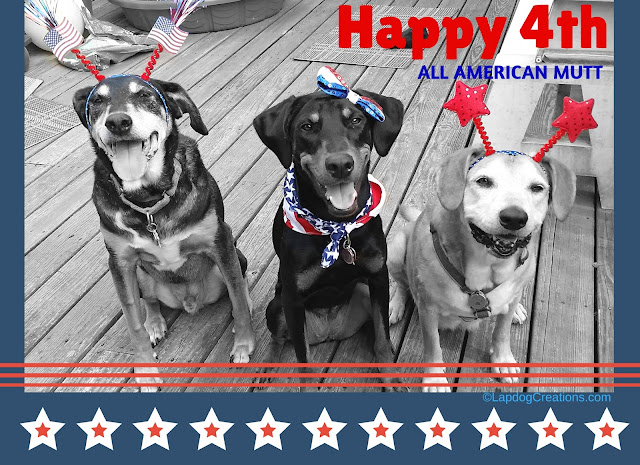Three rescue dogs ready for 4th of July