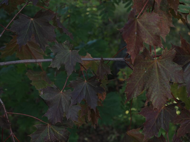 syksyn ruskeat lehdet