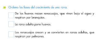 http://primerodecarlos.com/SEGUNDO_PRIMARIA/diciembre/Unidad5/actividades/cono/metamorfosis_rana.swf