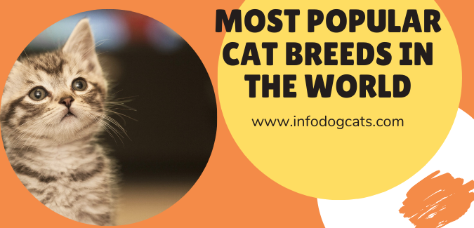 Most POPULAR Cat Breeds in the World