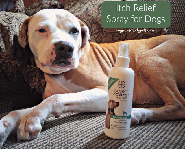 Itch Relief Spray for Dogs from #BayerExpertCare