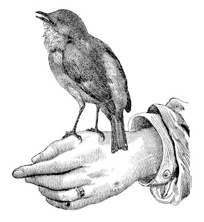 bird image hand perch