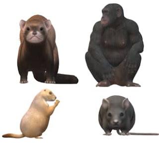 விலங்குகளும் பழமொழிகளும் - Animals and proverbs in tamil.