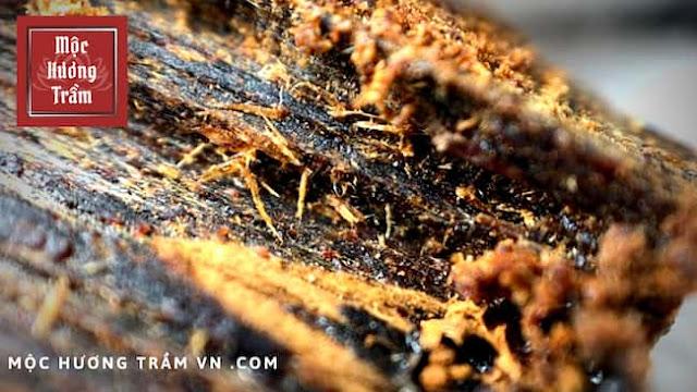 Quá trình hình thành trầm hương