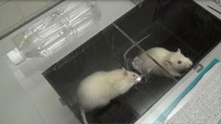 Eksperiment Untuk Mengukur Empati Hewan
