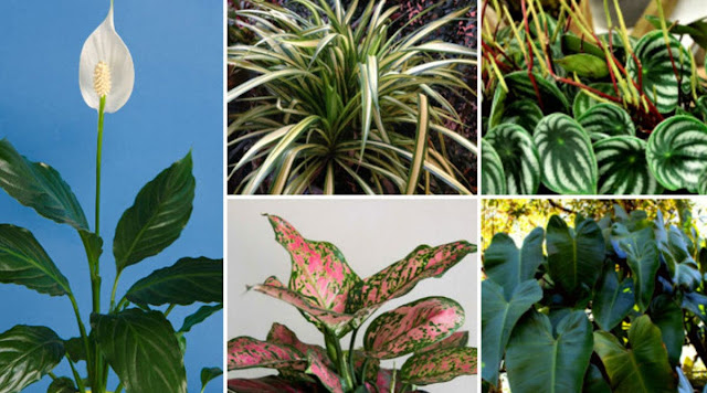 Houseplants That Don't Need Sunlight To Grow
