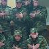 Οι Αλβανοί βουλευτές ζητούν και τα... ρέστα μετά το προκλητικό περιστατικό με τους νεοσύλεκτους (video)