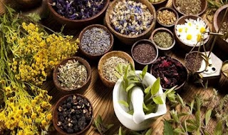 Jenis dan Manfaat Tanaman Herbal Untuk Kesehatan Anda