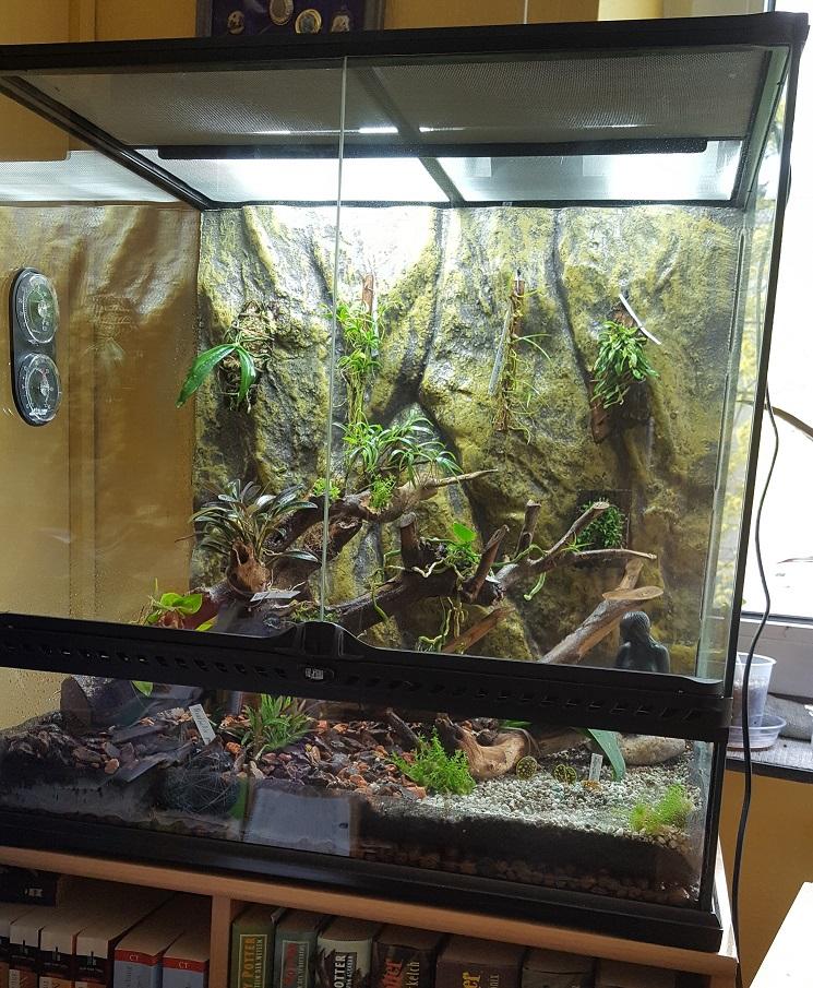 Federle News Orchideen Terrarium