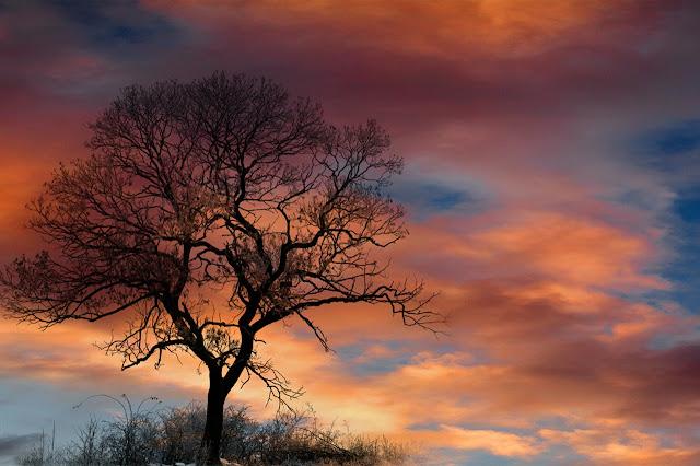 Günbatımı ve Ağaç