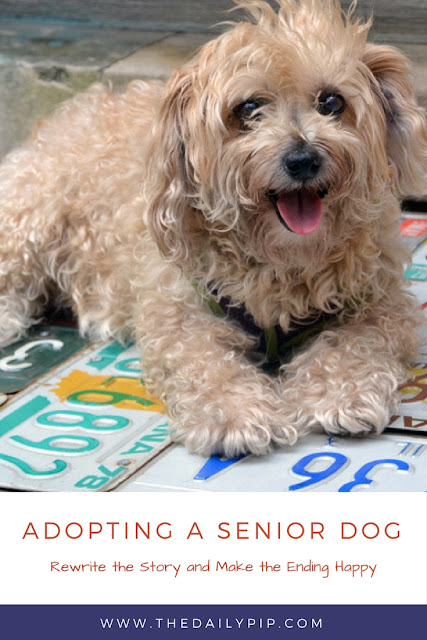 Adopting a senior dog is a wonderful thing that allows you to rewrite the story and make the middle and ending happy