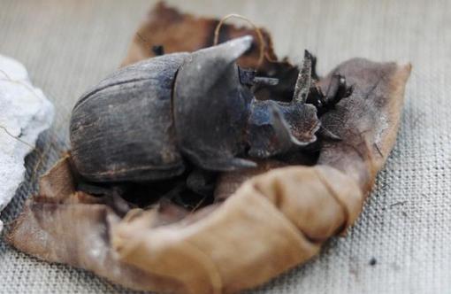 De rarissimes scarabées momifiés découverts dans une tombe à saqqarah