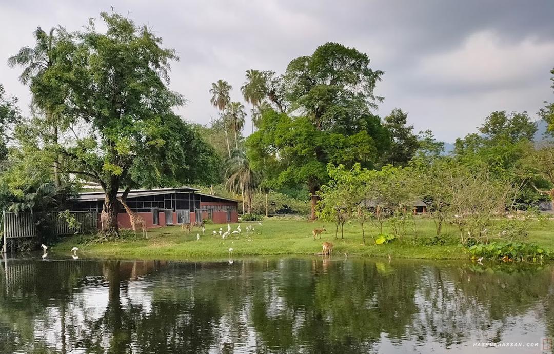 Zoo Taiping waktu PKPP