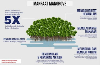 mangrove center graha indah