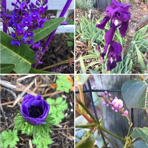 Four purple flowering plants