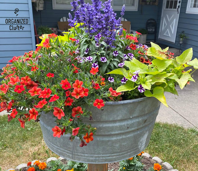 Photo of a laundry tub planted with annuals