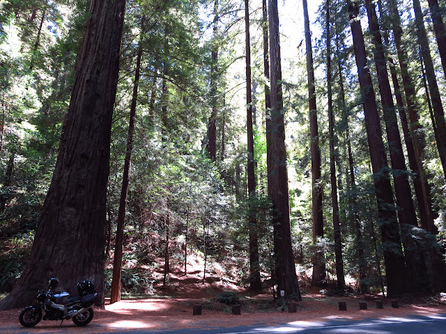 Aprilia Tuono Avenue of the Giants California