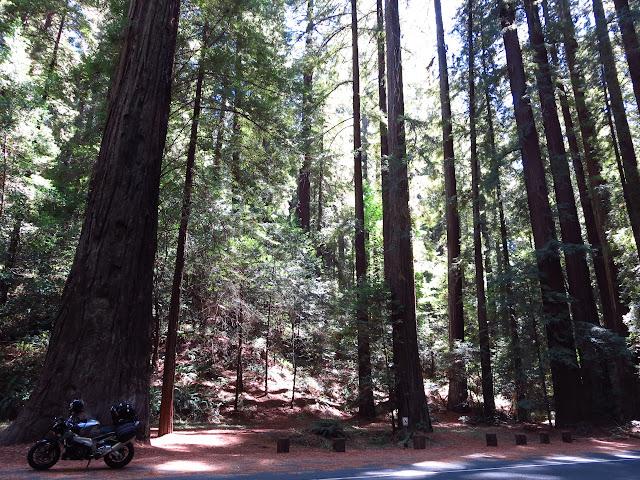 Aprilia Tuono Avenue of the Giants California
