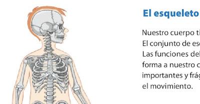 http://www.primaria.librosvivos.net/archivosCMS/3/3/16/usuarios/103294/9/6EP_Cono_cas_ud3_elEsqueleto/el_esqueleto.swf