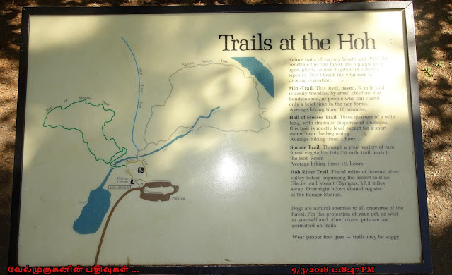 Trails at Hoh Rain Forest