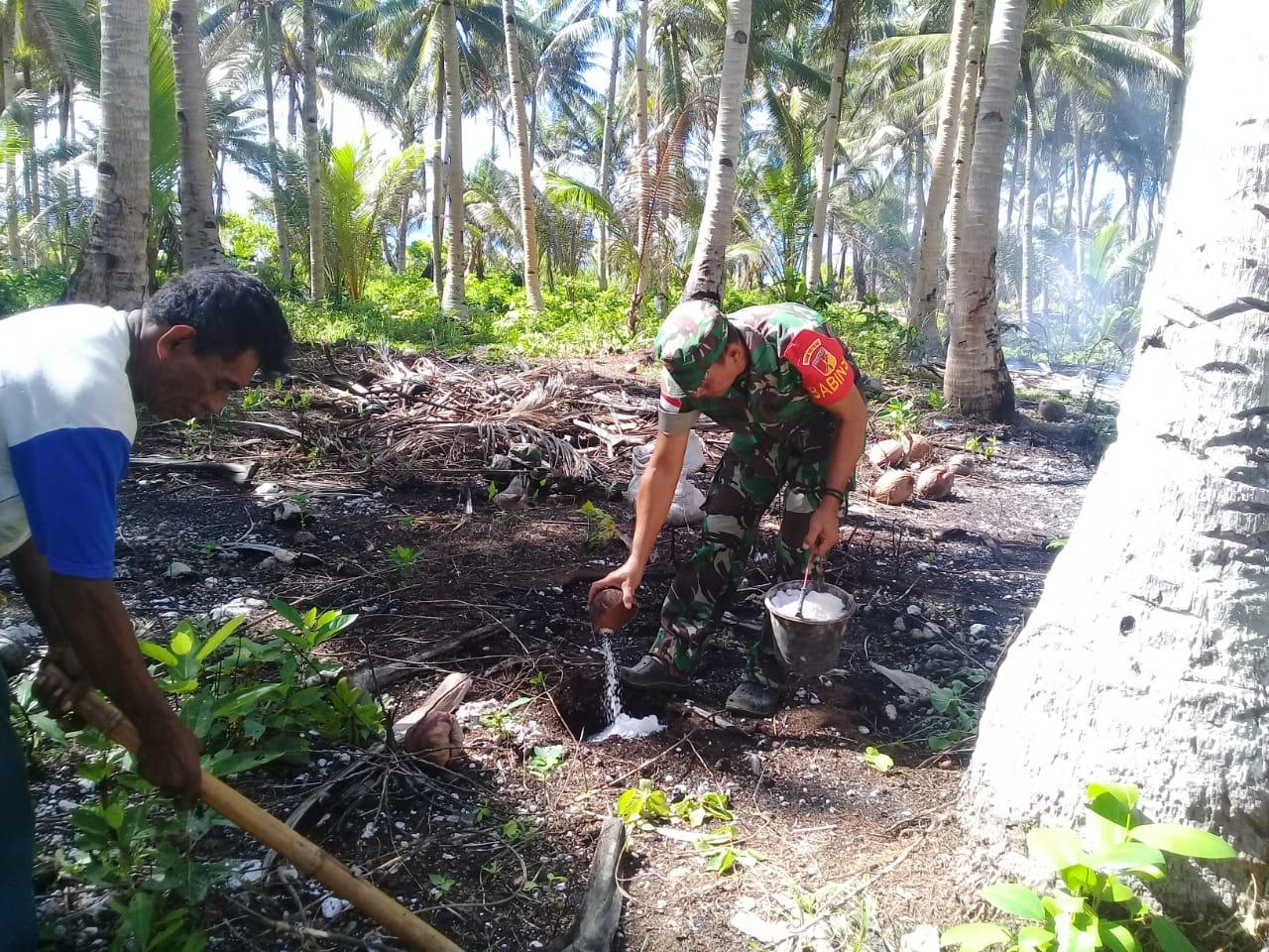 Babinsa Karatung Tengah Koramil 1312-06/Nanusa Bantu Petani Beri Pupuk Tanaman Kelapa