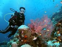 Perhatikan Hal berikut Sebelum Wisata Bawah Laut