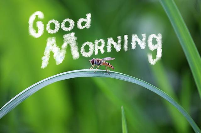 Good Morning Whatsapp Images