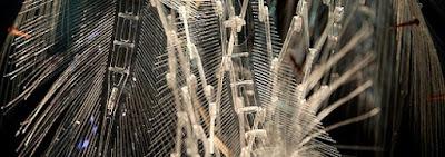ZTE explora els últims avenços en transformació de xarxes