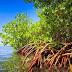 Pengertian Kawasan Hutan Mangrove Sebagai Salah Satu Sumber Daya Laut Pesisir