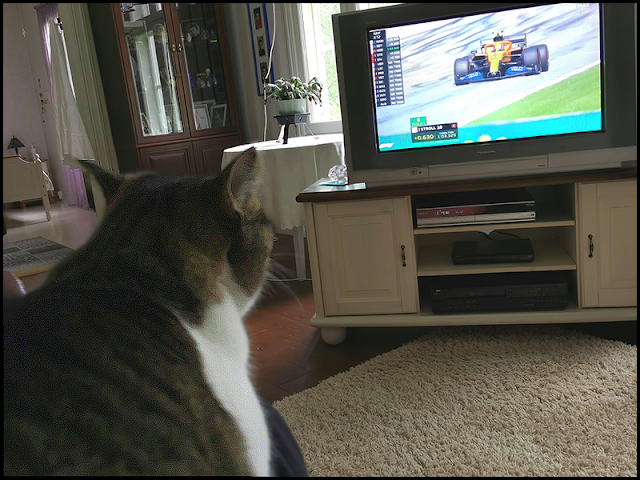 Funny cat watching Formula One race like humans